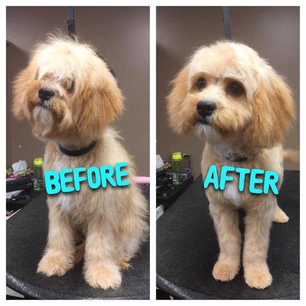 Cedar - first haircut!