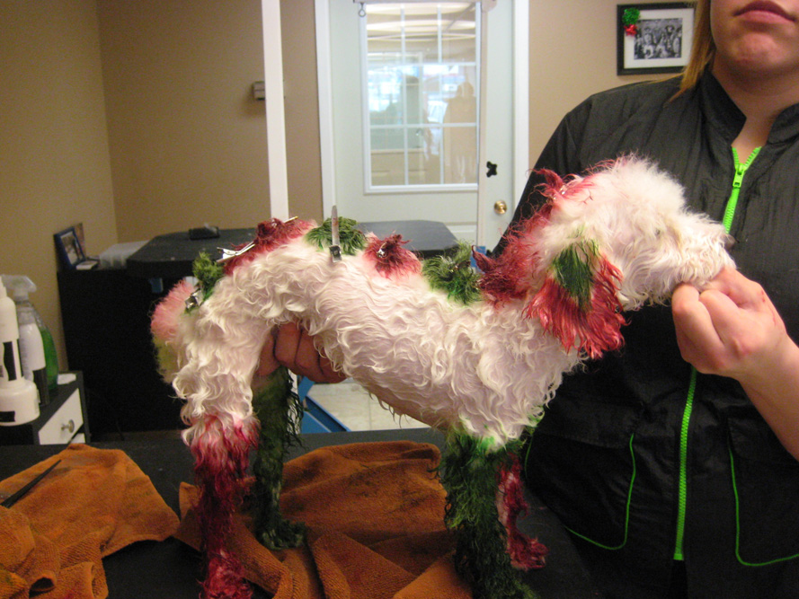 During a Christmas hair dye