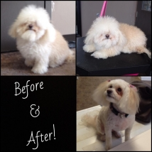 We knew there was a dog someone in there, under all that fuzz! Dakota before, and after! Wow!