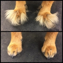 Fuzzy feet no more!