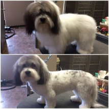 Kerby's first haircut! Love the spots that showed up after he lost some fuzz!