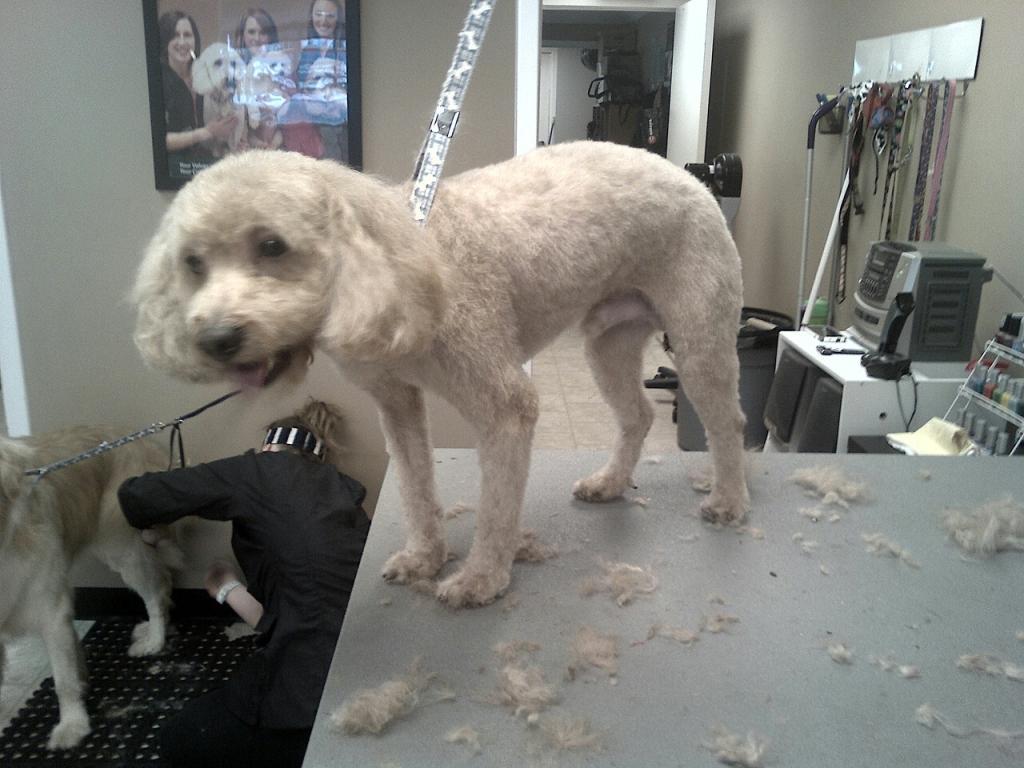 Milo after