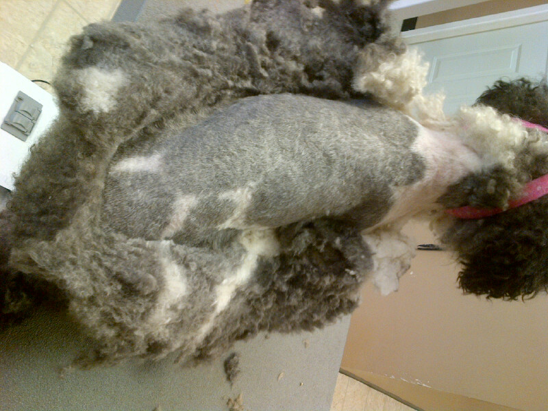 Gizmo during (matted)