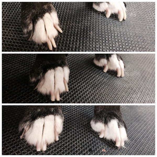 Nails before, after clipping, and after grinding