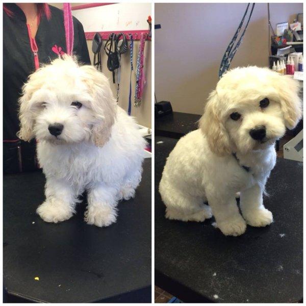 Puppy's first haircut!