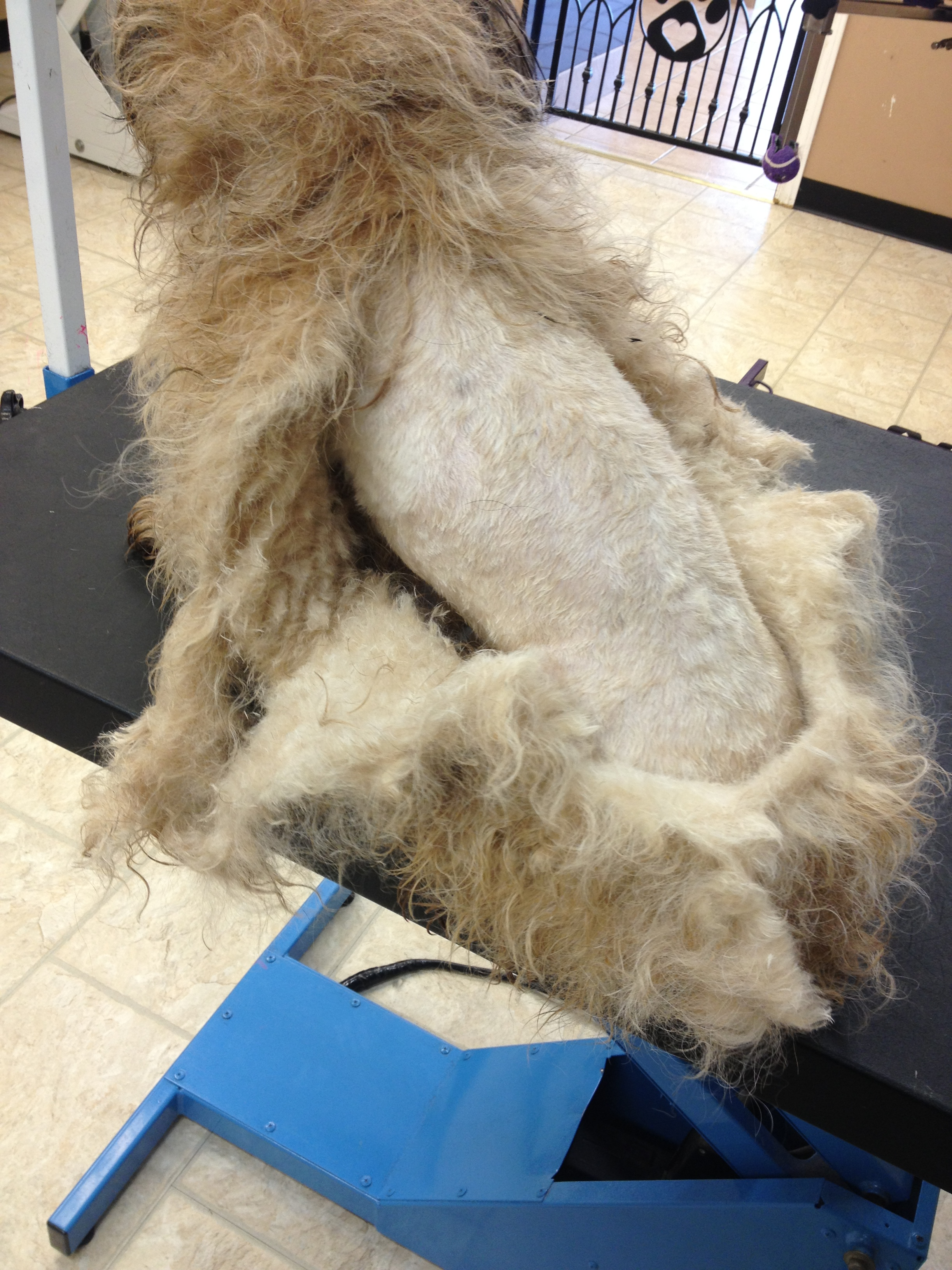 Rufas during (matted)
