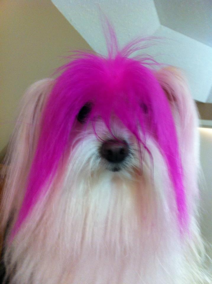 Keesha's pink bangs
