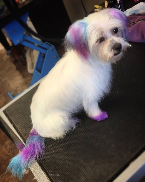 Rose's unicorn hair dye!
