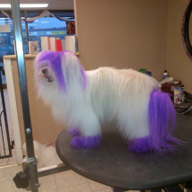 Keesha's purple do