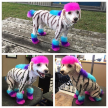 Unicorn Zebra Stella!