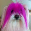 Hair Dye & Creative Grooming