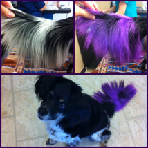 Layla's purple tail