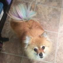 Angel's colorful tail highlights