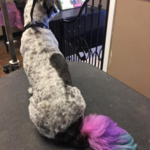 Peanut's unicorn tail!