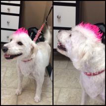 Lexi's temporary pink gel mohawk