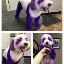 Purple Panda Care Bear Stella