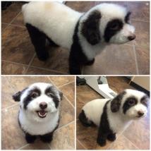 Stella the Panda!