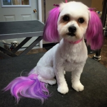 My Little Pony look-a-like!