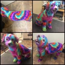 Tie Dye Stella!