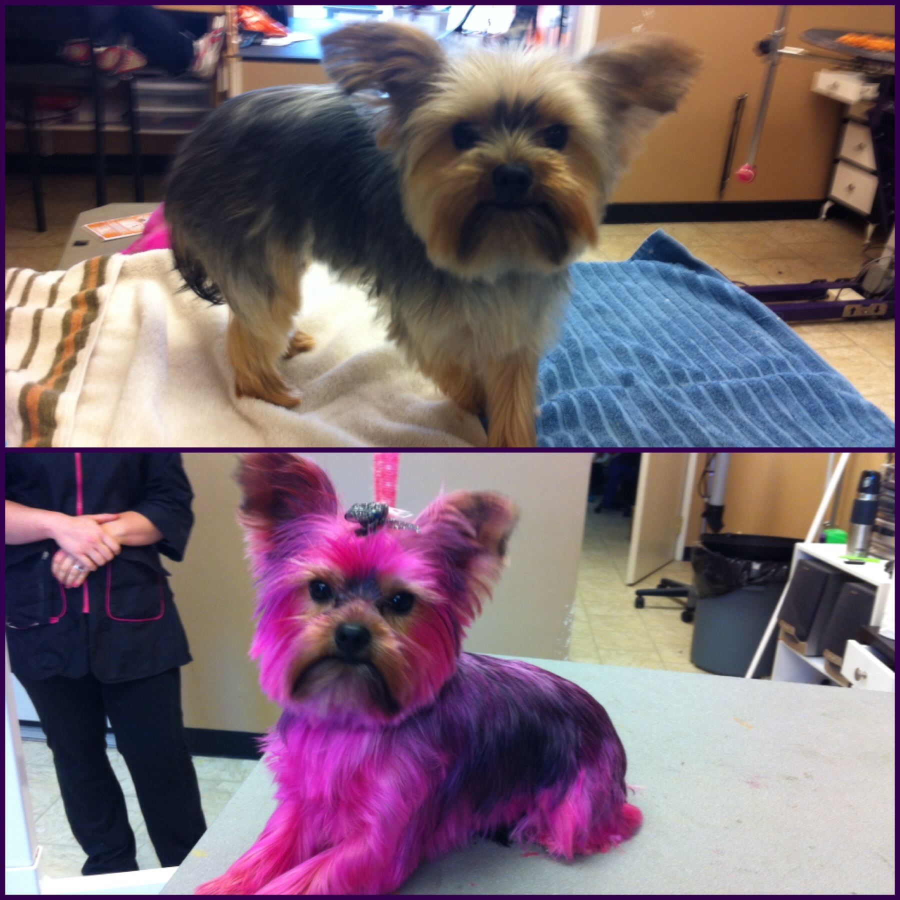 Kinzie before and after her pink dye job!
