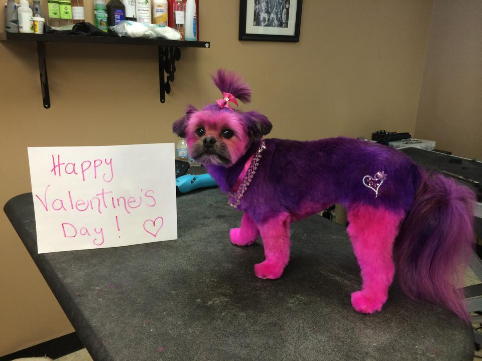 Happy Valentine's Day from Fur-Ever Loved Pet Salon (and Molly!) xoxo