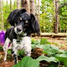 Kirsty's dog Layla