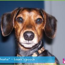 Laura's dog Charlie