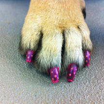 Rylee's polka dot nails