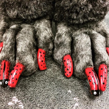 Ladybug nails!