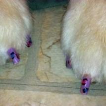 Cassie's leopard nails