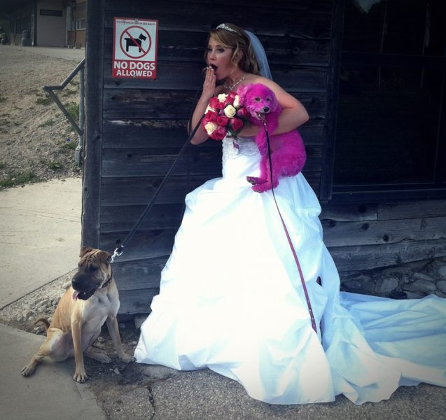 Nicole with her dogs on her wedding day - yes, we dyed Stella pink to match the bridesmaid dresses!
