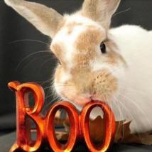 Rabbit Butterbean