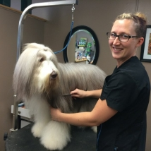 Trish grooming the Bearded Collie, Olive